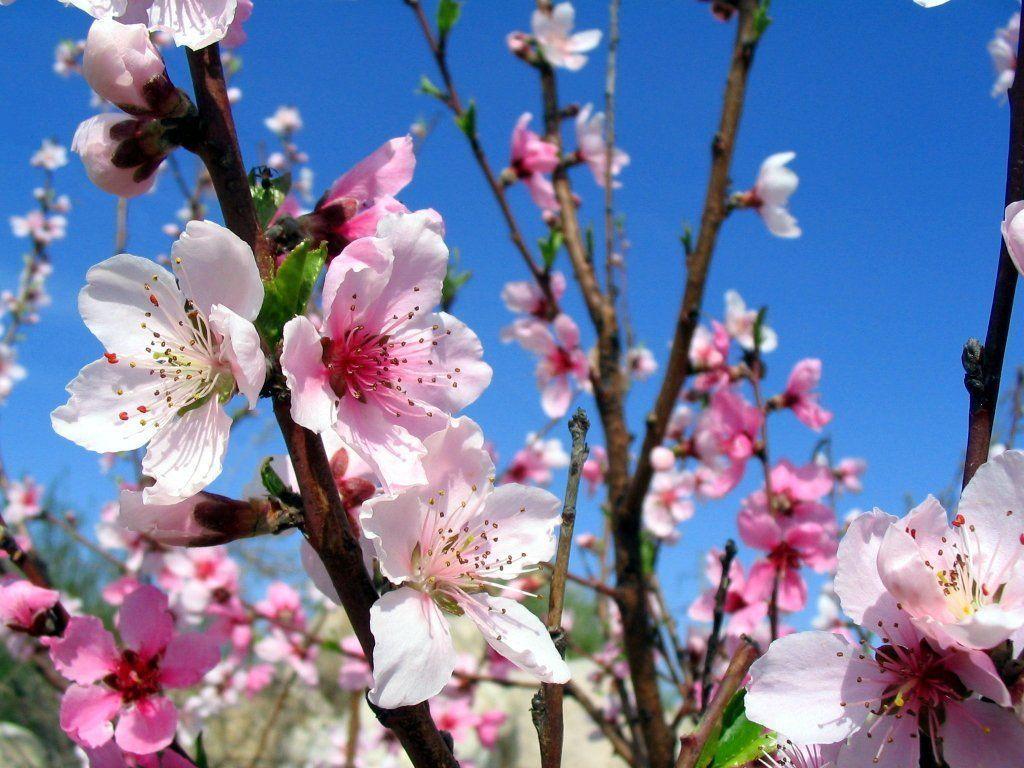 широко картинка середина весны мелкие, знаем них